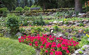 Фотография Канада Парки Камень Бегония Банф Cascade Gardens