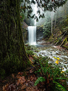 Картинки Канада Парки Водопады Деревья Мох Benson Creek Falls Regional Park