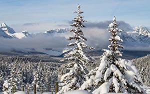 Картинка Канада Зимние Леса Снег Ель Туман Alberta