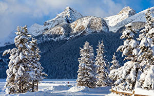Фото Канада Зимние Парки Горы Банф Ели Снега Природа