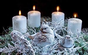 Картинки Свечи Огонь Птица Новый год Гнездо