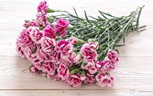 Фотография Гвоздики Букет Розовая Цветы