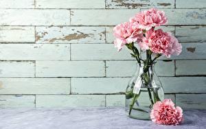 Фото Гвоздики Розовая Ваза Цветы