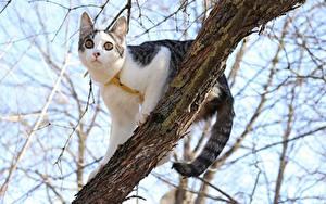 Фото Коты Ветка Взгляд Животные