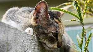 Фото Коты Вблизи Голова Животные