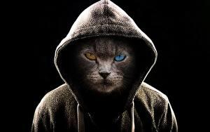 Фото Кот Оригинальные Смотрит Капюшоне Черный фон животное