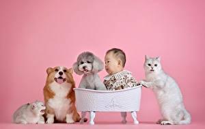 Фотография Кошки Собаки Азиаты Цветной фон Вельш-корги Пуделя Младенцы