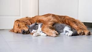 Обои для рабочего стола Кот Собака Двое Спят Лежит животное