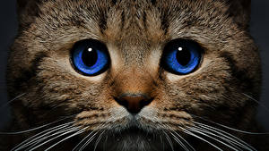 Фото Кот Глаза Морда Животные