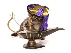Фото Коты Белый фон Забавные Котята Шляпа Genie Животные