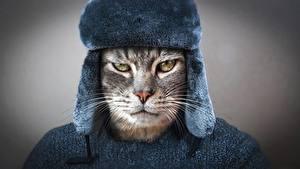 Фото Кошки Смотрит Морда Усы Вибриссы Шапки Хмурость Российские Животные
