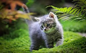 Картинки Кошка Трава Котята Размытый фон
