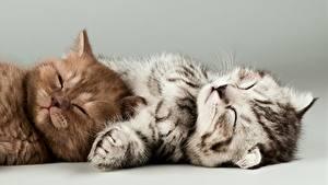Фото Кошки Серый фон 2 Лежачие Сон Котят Лапы животное
