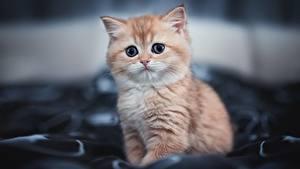 Фотография Кот Котята Милый Взгляд Боке Животные