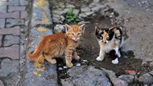 Обои Кошка Котят Две Животные