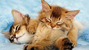 Фотография Кошки Котенок Вдвоем Рыжий животное