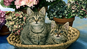 Фото Кошки Котенок Двое Смотрит Животные