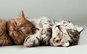 Обои Кошки Котенок Два Спит животное