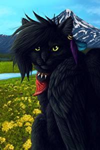 Фото Кошки Волшебные животные Крылья Черный Фэнтези