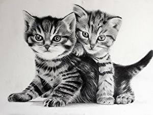 Картинка Кошки Рисованные Котят 2 Черно белое Животные