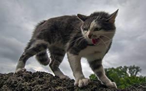 Фотография Кошки Злость