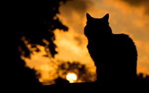 Обои Коты Рассветы и закаты Силуэт Животные