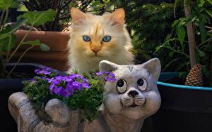 Фотография Кошки Две Взгляд Животные