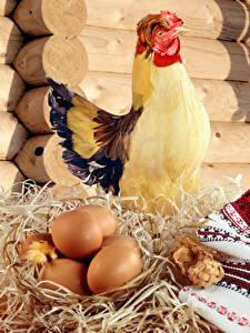 Фотографии Курица Яйца Сено Животные