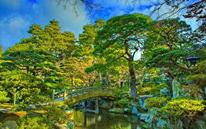 Фото Китай Киото Парки Пруд Мосты HDR Дизайна Дерево Imperial Palace park Природа