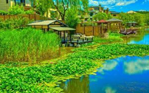Фото Китай Парк Пирсы Водяные лилии Речка HDRI Beijing Zen Garden