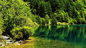Картинка Китай Парки Лето Озеро Лес Цзючжайгоу парк