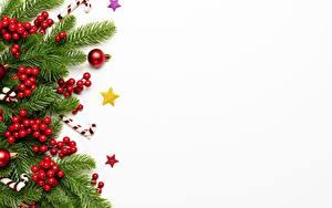 Фото Новый год Ягоды Шаблон поздравительной открытки Белый фон Ветки