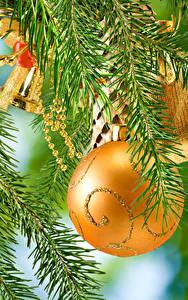 Картинки Рождество Ветки Шар