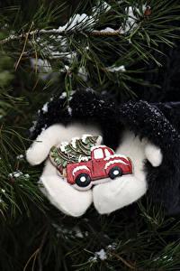 Фотографии Рождество Ветка Рукавицах Елка