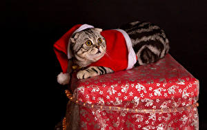 Фотография Рождество Кошки На черном фоне Униформе животное