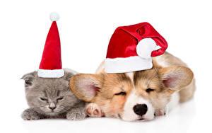 Картинки Рождество Кошки Собака Щенок Котята В шапке Вельш-корги Сон 2 животное