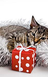 Обои Новый год Кошка Подарки Кубик Животные