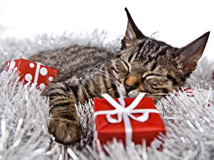 Фотографии Рождество Коты Подарки Спит Животные