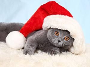 Фотографии Новый год Кошка Котята Шапки Смешные Лежа животное