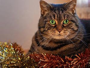 Обои Новый год Кошки Морда Животные