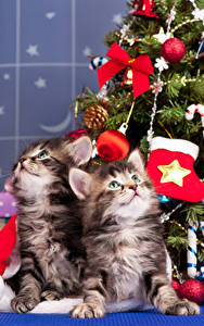 Обои Новый год Коты 2 Котята Шарики Смотрят
