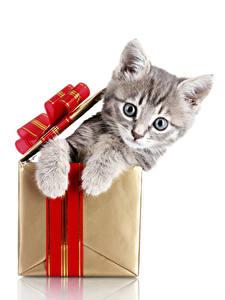 Фотографии Рождество Коты Белый фон Коробка Котята Смотрит Животные