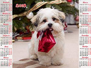Картинка Новый год Собаки Календарь Болоньез Подарки 2018 Российские Животные