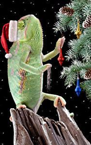 Обои Рождество Праздники Черный фон Новогодняя ёлка Шапка Шишки Хамелеоны Животные