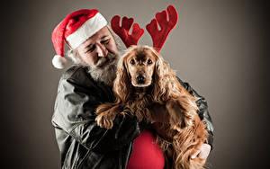 Фото Рождество Мужчины Собаки Серый фон Шапки Спаниель Рога Животные