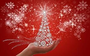 Фотография Новый год Снежинка Звездочки Елка Руки