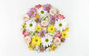 Картинка Хризантемы Альстрёмерия Розы Ромашки Белом фоне Дизайн