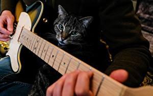 Картинка Вблизи Коты Гитары Рука животное