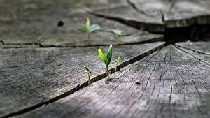 Картинка Вблизи Макросъёмка Растения Пне Природа