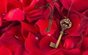 Фотография Вблизи Розы Замковый ключ Лепестки